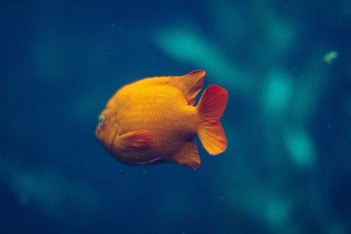 Why Your Website Has The Lifespan Of A Pet Goldfish - 5 Things You Can Do About It